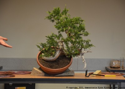Yama-bonsai_BjornDemo_03