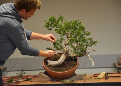 Yama-bonsai_BjornDemo_04