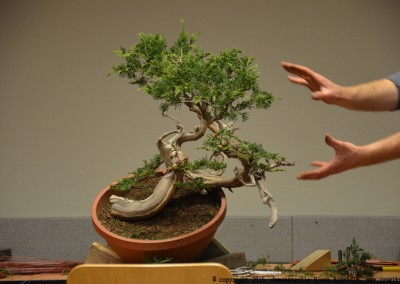 Yama-bonsai_BjornDemo_16