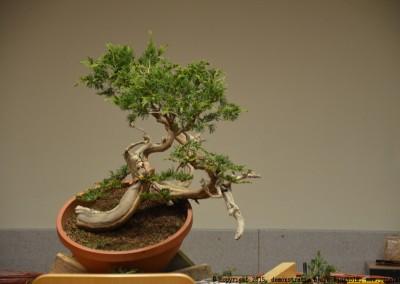 Yama-bonsai_BjornDemo_17