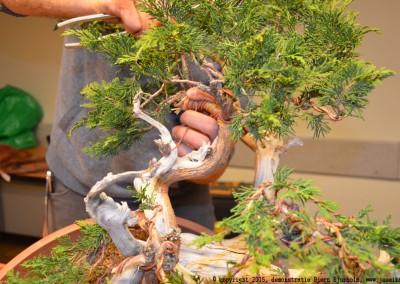 Yama-bonsai_BjornDemo_18
