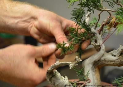 Yama-bonsai_BjornDemo_20