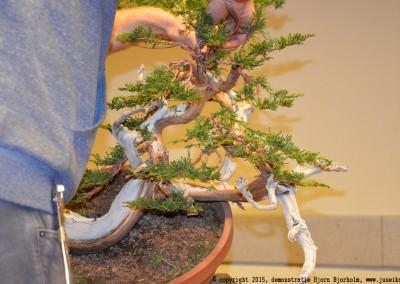 Yama-bonsai_BjornDemo_22