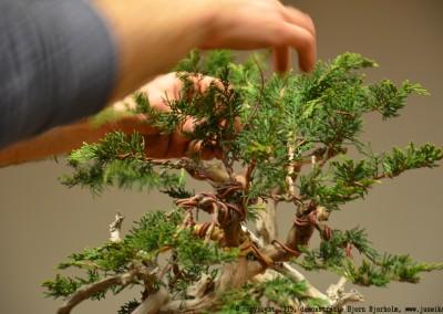 Yama-bonsai_BjornDemo_23