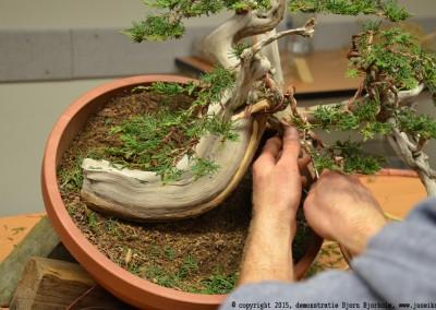 Yama-bonsai_BjornDemo_27