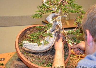 Yama-bonsai_BjornDemo_28
