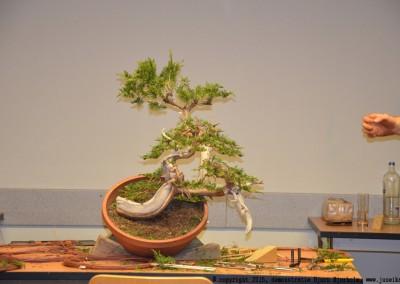 Yama-bonsai_BjornDemo_29