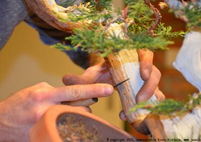 Yama-bonsai_BjornDemo_35