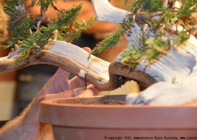 Yama-bonsai_BjornDemo_37