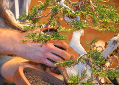 Yama-bonsai_BjornDemo_39