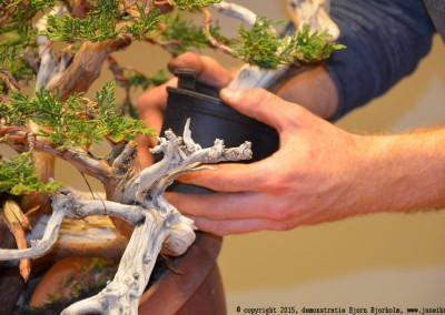 Yama-bonsai_BjornDemo_42