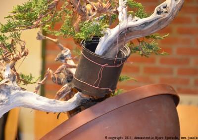 Yama-bonsai_BjornDemo_44