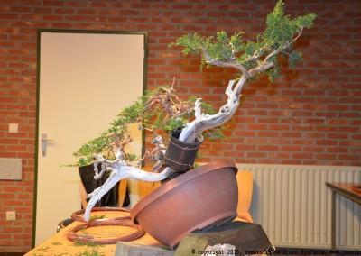 Yama-bonsai_BjornDemo_45