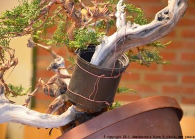 Yama-bonsai_BjornDemo_46