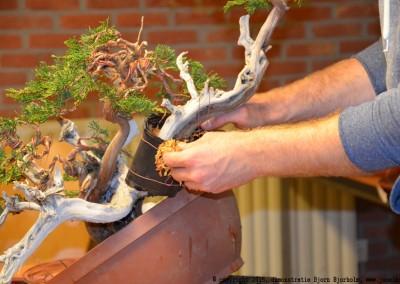 Yama-bonsai_BjornDemo_47