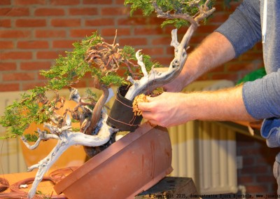 Yama-bonsai_BjornDemo_48