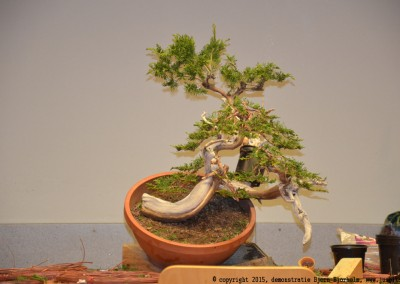 Yama-bonsai_BjornDemo_49