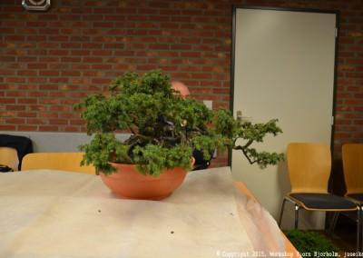 Yama-bonsai_Bjorn_003
