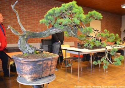 Yama-bonsai_Bjorn_006