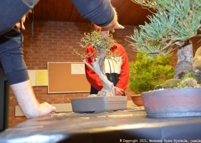 Yama-bonsai_Bjorn_008