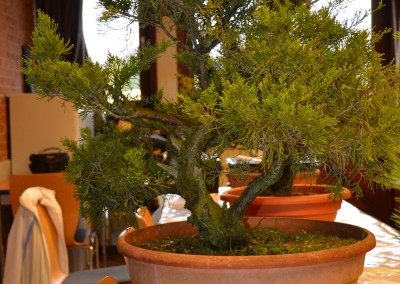 Yama-bonsai_Bjorn_009