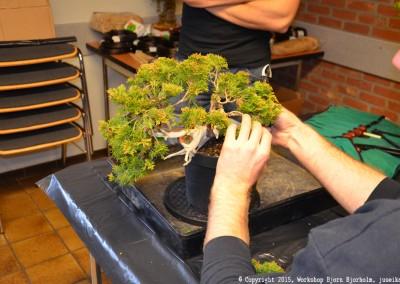 Yama-bonsai_Bjorn_017