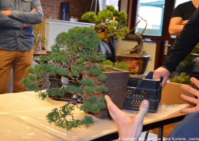 Yama-bonsai_Bjorn_021
