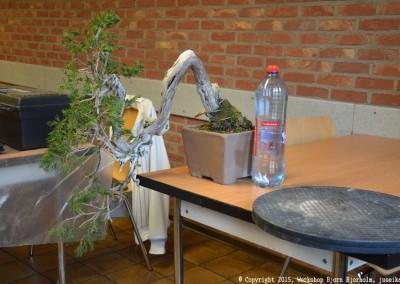 Yama-bonsai_Bjorn_023