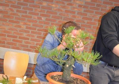 Yama-bonsai_Bjorn_029