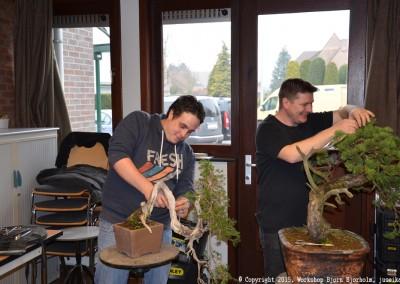 Yama-bonsai_Bjorn_031