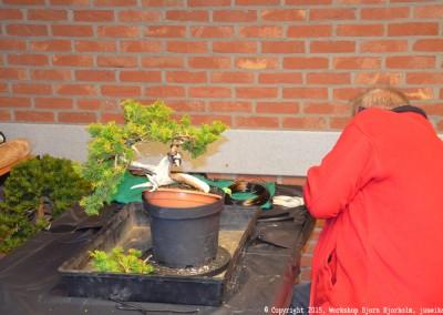 Yama-bonsai_Bjorn_032