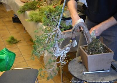 Yama-bonsai_Bjorn_039
