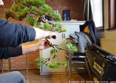 Yama-bonsai_Bjorn_044