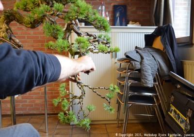 Yama-bonsai_Bjorn_045