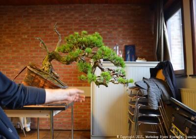 Yama-bonsai_Bjorn_046