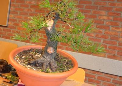 Yama-bonsai_Bjorn_059