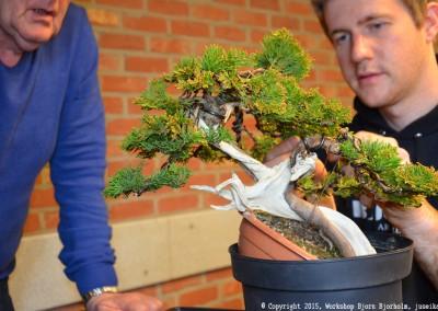 Yama-bonsai_Bjorn_063
