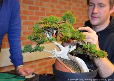 Yama-bonsai_Bjorn_064