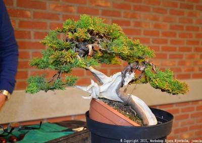 Yama-bonsai_Bjorn_066