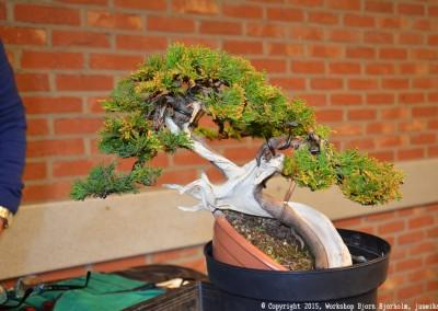 Yama-bonsai_Bjorn_067
