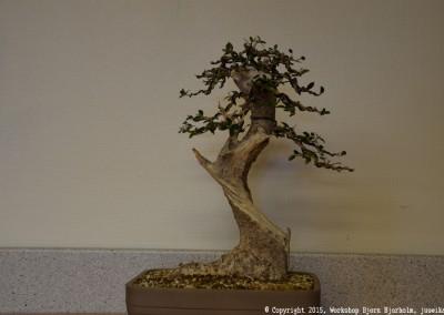 Yama-bonsai_Bjorn_071
