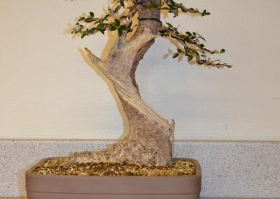 Yama-bonsai_Bjorn_072