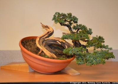 Yama-bonsai_Bjorn_073