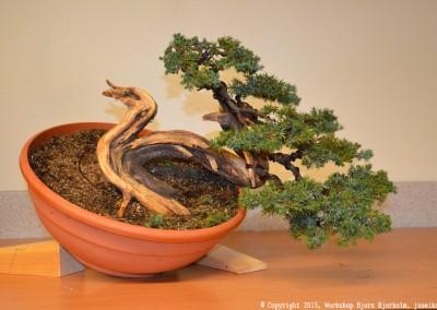 Yama-bonsai_Bjorn_074