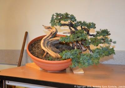 Yama-bonsai_Bjorn_075
