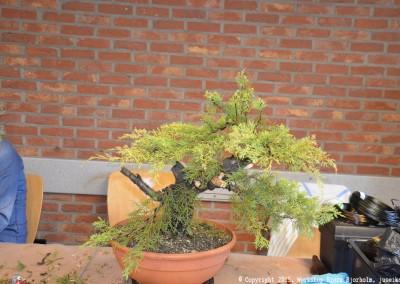 Yama-bonsai_Bjorn_076