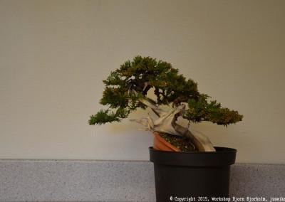 Yama-bonsai_Bjorn_079