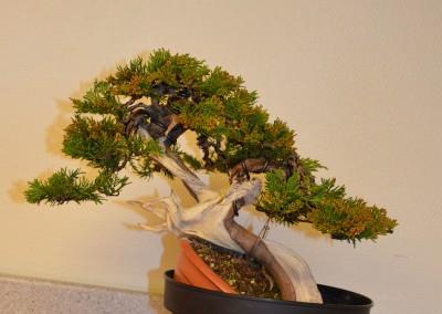 Yama-bonsai_Bjorn_080