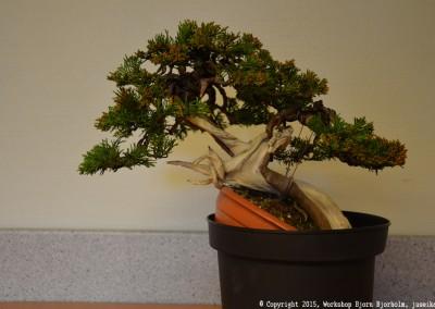 Yama-bonsai_Bjorn_082