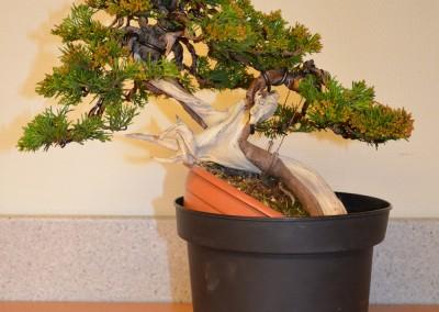Yama-bonsai_Bjorn_083